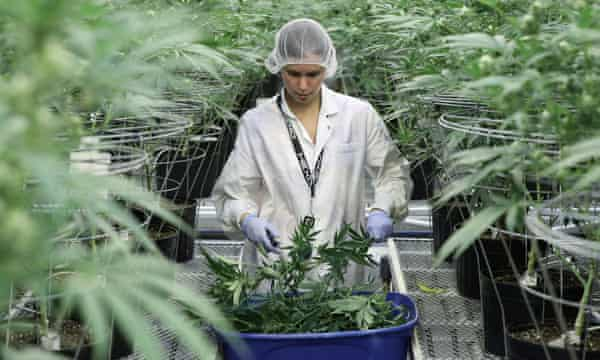 'When it comes to marijuana, a lot of the research and legislation is patchy and regionally specific.'