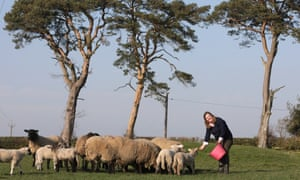 "Sally Urwin … 'I refuse to say: ""Oh, I'm the farmer's wife.""'"