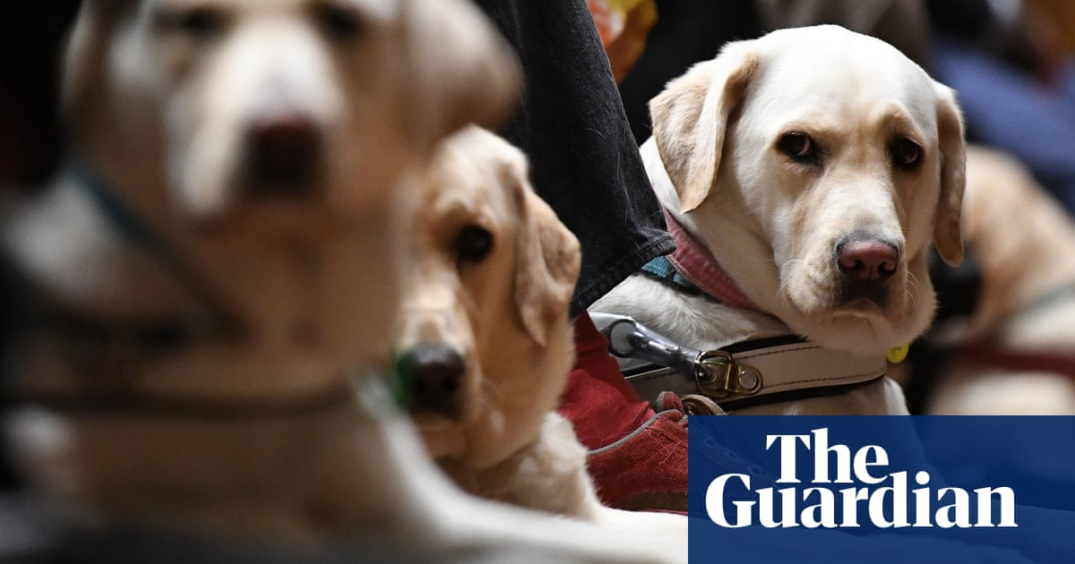 Miserable, anxious, depressed: how guide dogs are faring in the pandemic