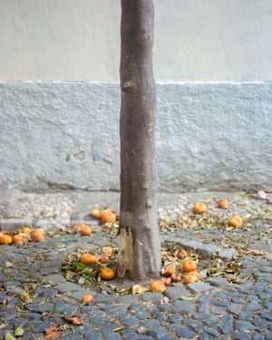 An orange tree in one of Alfama's many cobbled alleyways.