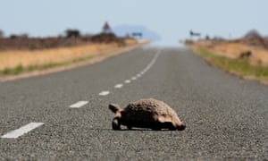 The Karoo is full of wildlife