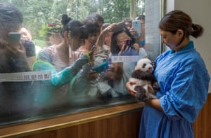 Nature – stories, second prize A caretaker cradles a panda at the Bifengxia giant panda breeding and research centre in Sichuan, China