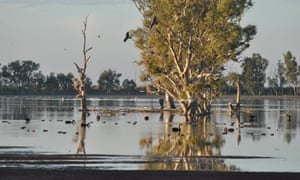Wetlands at Nimmie Caira near Balranald.