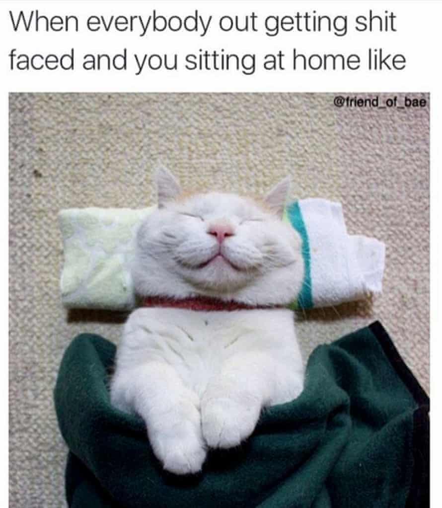 cat on instagram