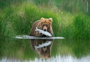 A brown bear pulls a sockeye salmon from the shallows of a river in Alaska's Katmai national park