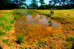 A new pond created by the Freshwater Habitats Trust on farmland near Oxford