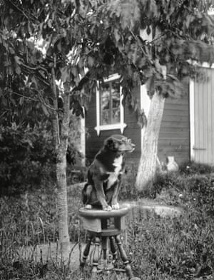 Stråle's dog sitting with eyeglasses, Kaby, Simtuna Parish: 1922 He was a music lover, holder of the Swedish agency for the British record label and gramophone brand His Master's Voice. For a time he ran a rural shop from his home, and he even operated an illicit bar for a while.