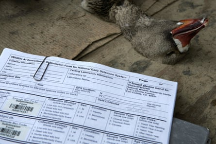 A goose shot by a hunter lies near a chart used to document samples