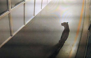 A still from CCTV footage capturing a leopard walking inside an Indian car factory in Manesar, India