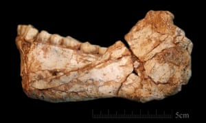 The first almost complete adult mandible discovered at the site of Jebel Irhoud. The bone morphology and the dentition display a combination of archaic and evolved features.