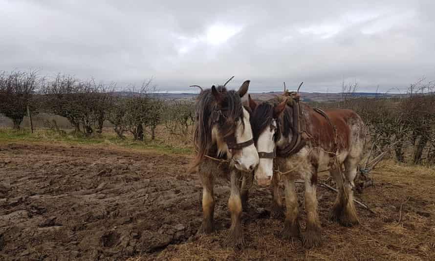 Sillywrea Farm, powered by horses.
