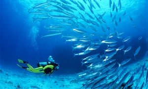 Woman scuba diving near tropical fish