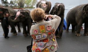 Circus fan Katie Harmke photographs the performing elephants before the matinee on the final day of shows.