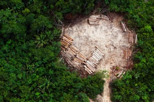 An aerial view of indigenous land in the region of Altamira in the Brazilian Amazon, cleared for illegal logging