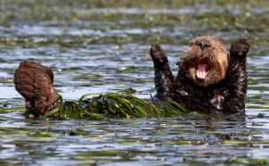 Cheering sea otterPenny Palmer wins highly commended for her happy sea otter in California, US.
