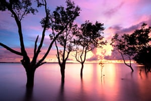 Purple sunset sky through the mangroves at Nightcliff beach, Darwin.