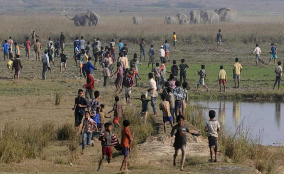 Villagers watch as a herd of wild elephants walks towards them