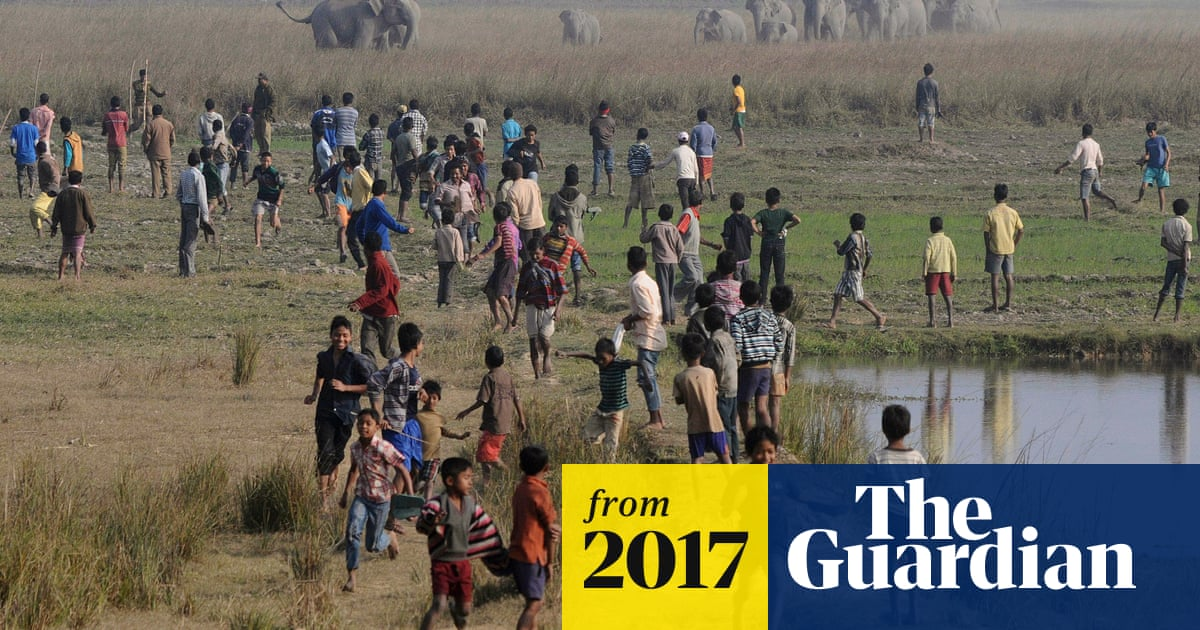 More than 1,000 people killed in India as human and wildlife