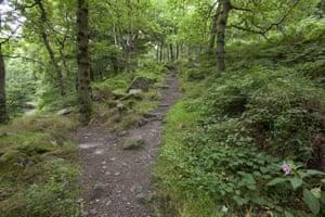 Padley Wood