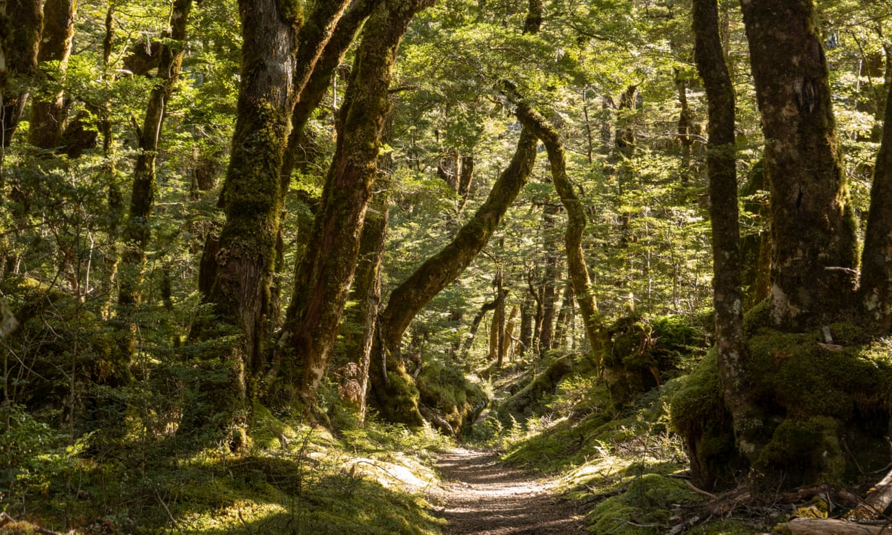 Rees & Mount Aspiring National Park Dart and Cascade Saddle Track