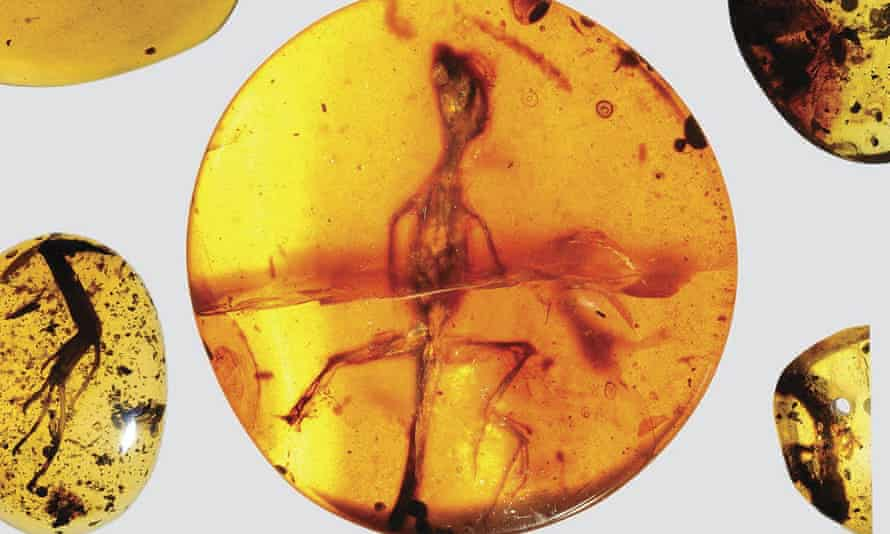 lizard specimens preserved in ancient amber from present-day Myanmar in Southeast Asia