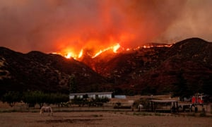 Horses graze as flames from the Apple fire skirt a ridge in a residential area of Banning, California, at the weekend.