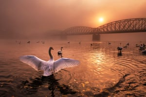Birds category winner  Greeting the Sun by Peter Čech (Czech Republic)