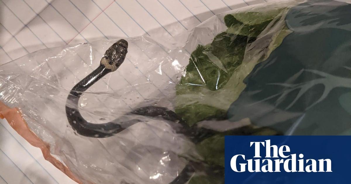 Snakes and lettuce: shoppers in Australia find venomous snake in Aldi fresh produce bag
