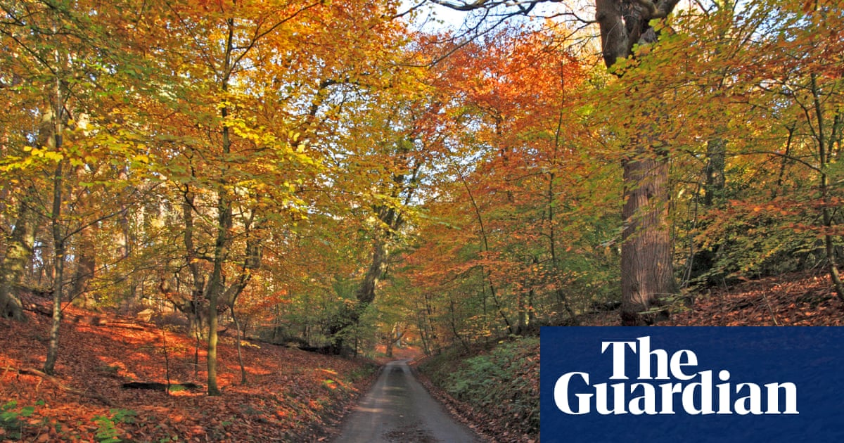 Britons find more joy in autumn colours than Christmas, study finds