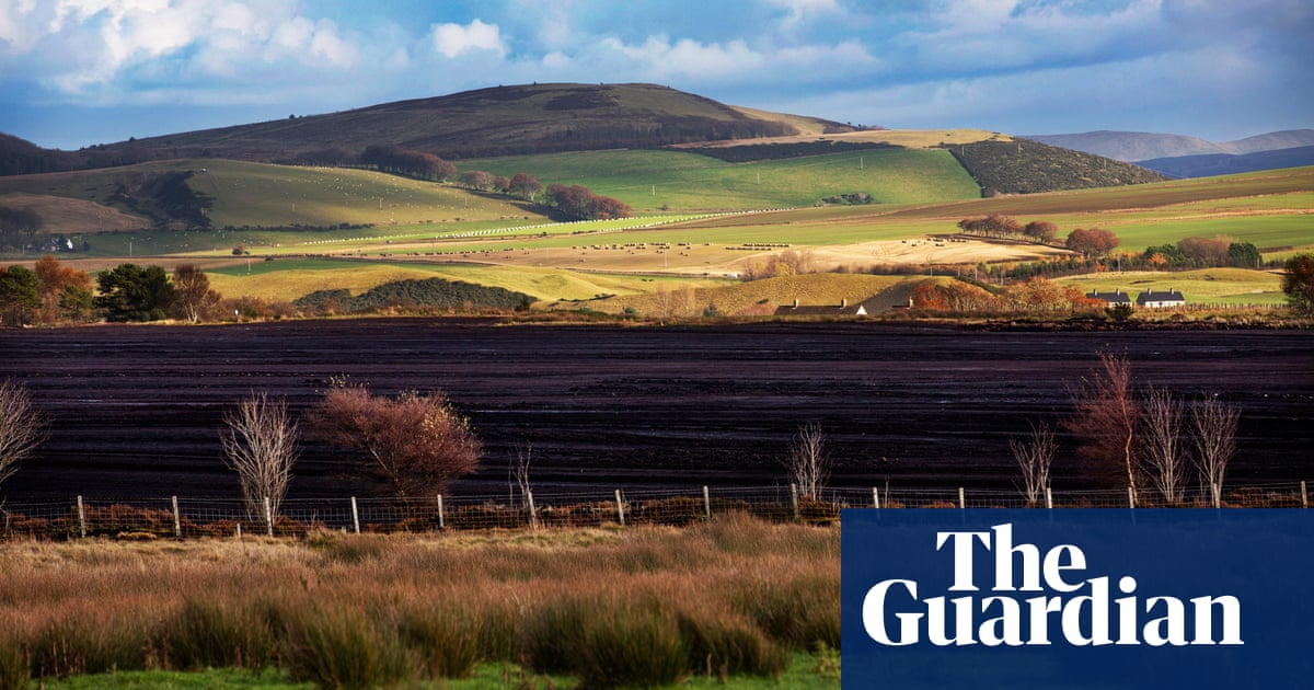 Peat-based compost used by UK public bodies despite proposed ban