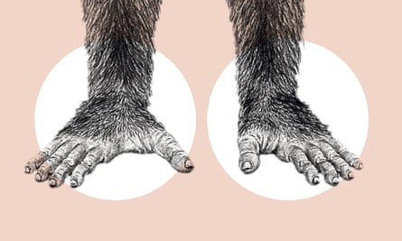 Ardipithecus ramidus had a grasping big toe, suggesting she would have been an agile climber.