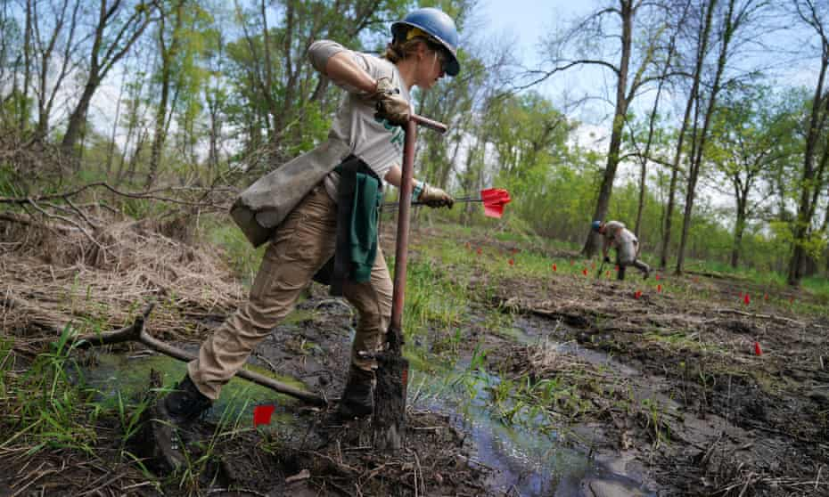 Conservation Corps volunteers plant hundreds of young trees in a Mississippi floodplain on national refuge land in south-east Minnesota in 2019.