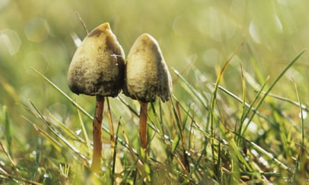 Climate change has had a dramatic effect on the fruiting season for magic mushrooms.