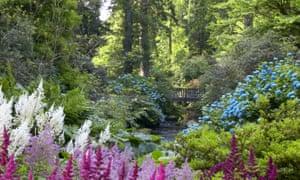 Astilbe and hydrangeas in the woodland gardens at Bodnant Garden, Conwy.