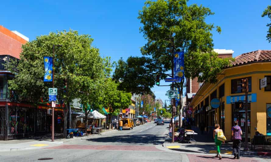 Trees in Berkeley, California. By planting only male trees – such as the cultivated deodar cedar – which shed pollen unused by female flowers, planners can worsen human allergies.