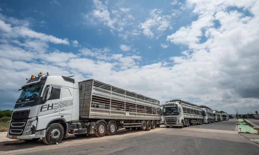 Trucks carrying animals away from the Bahijah