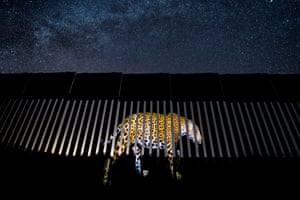 Wildlife photojournalism, single image winner: Another Barred Migrant by Alejandro Prieto, Mexico