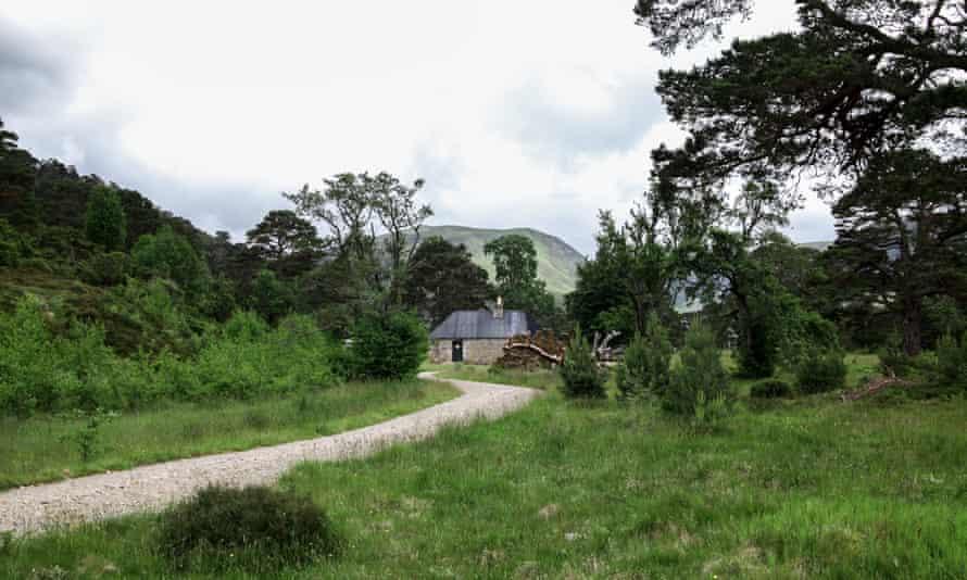 Glen Feshie. Wild Guide Scotland