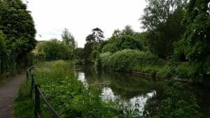 Lush green banks and trees along river path