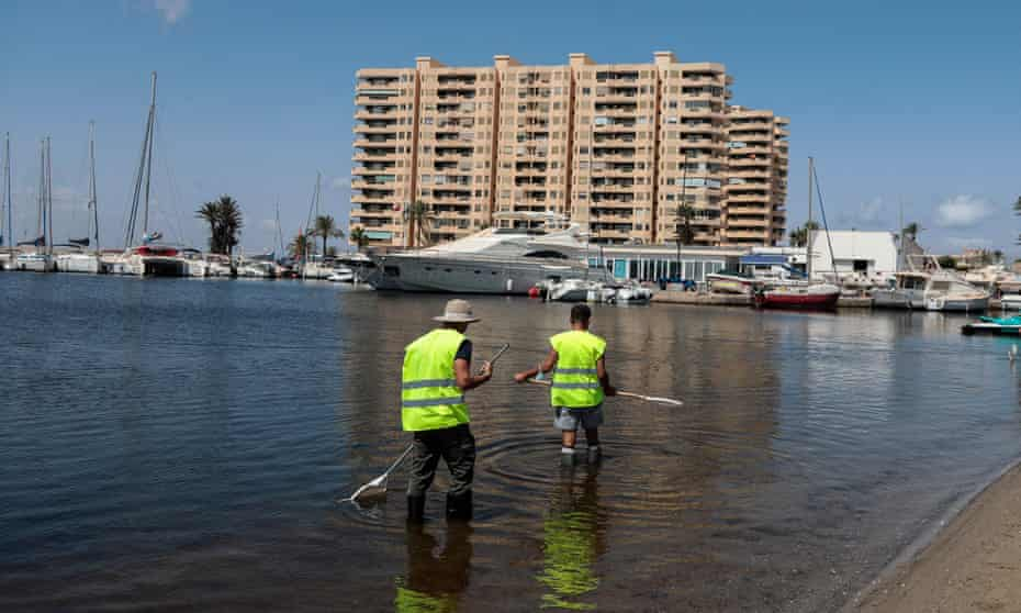 Workers clean the shores of the Mar Menor.