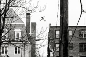 Roof Runners shot in the Columbia Heights area of Washington, D.C. in summer of 2015.