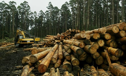 Logging in Melbourne's main water catchment area is resulting in yields 16% below average.