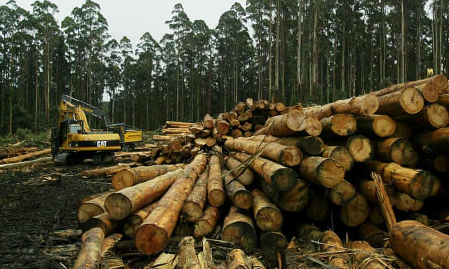 A truck is loaded with mountain ash from the Toolangi state forest