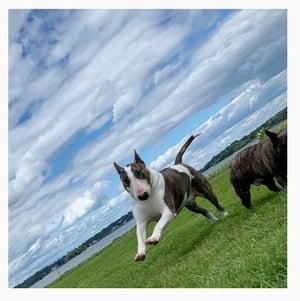 Bark star: bull terrier Neville @nevillejacobs Neville is the dog of Marc Jacobs he is a Bull Terrier