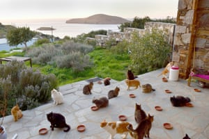 Cats on the island of Syros, Greece
