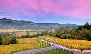 Turning gold: sunset over autumn coloured vineyards.