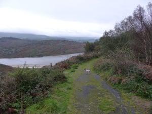 The Gwaith Powdwr nature reserve at Penrhyndeudraeth, above the Dwyryd estuary.