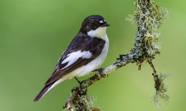 Feeding birds in our gardens is a joy – but it may be harming weaker species
