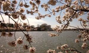 Cherry blossom in front of Jefferson Memorial, Washington DC, March 2011