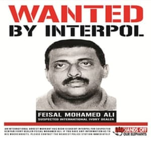 Advert published by WildlifeDirect in Kenyan daily newspapers publicising the Red Alert issued by Interpol for the arrest of Feisal Mohamed Ali, October 2014.